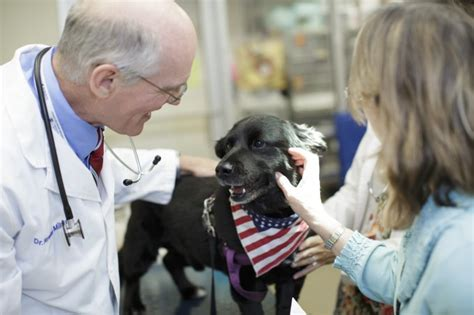 oncology small animal hospital college  veterinary