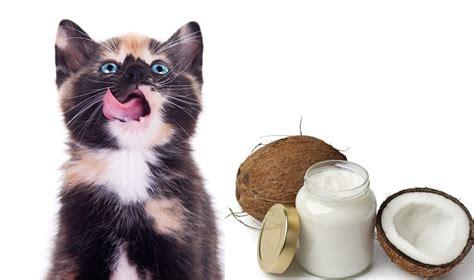 can cats eat coconut flour