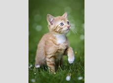 Hintergrundbilder Katzen Coole Desktop Wallpaper in Full