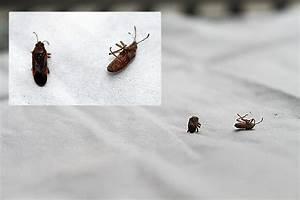 Käfer In Der Wohnung Bestimmen : k fer in der k che gr ser im k bel berwintern ~ Eleganceandgraceweddings.com Haus und Dekorationen
