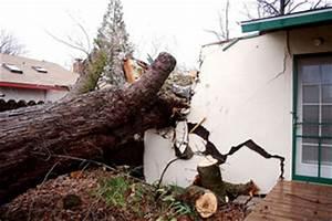 Quel Arbre Planter Près D Une Maison : quand et pourquoi abattre un arbre ~ Dode.kayakingforconservation.com Idées de Décoration
