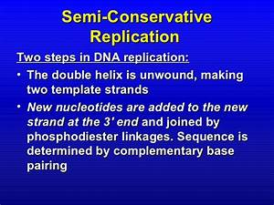 chapter 13 With semiconservative replication involves a template what is the template
