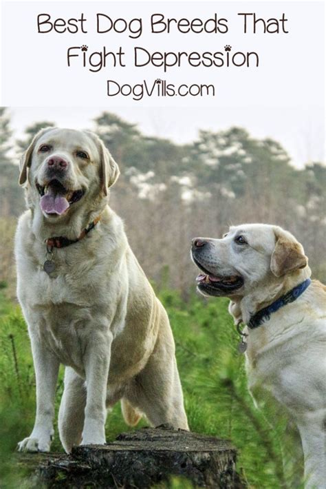 top   dog breeds  fight depression dogvills