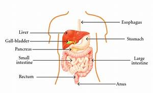 Architecture Of The Human Gi Tract  18