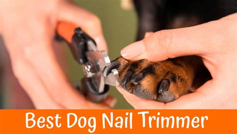 guide  review   dog nail trimmer