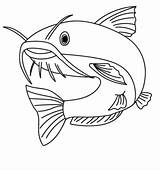 Coloring Catfish Pages Fish Printable sketch template