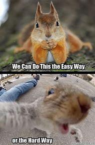 Squirrels Funny Animal Memes
