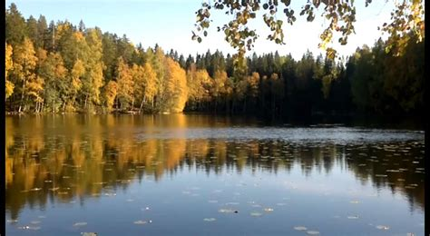 Tovaldas miskas rudeni - YouTube