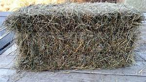 Brome Hay Square Bales - Nex-Tech Classifieds