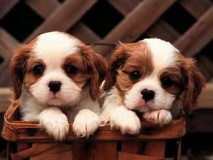 Cute Puppy Desktop Wallpapers - Wallpaper Cave