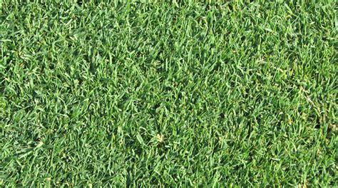 lawn grass types in india what are different kinds of lawn grass available in india
