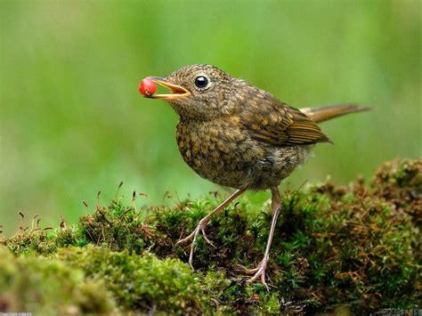 little bird eating wallpaper 4801 open walls
