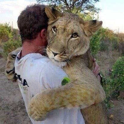 lion hug awwwwwwww wallpapers animales animales