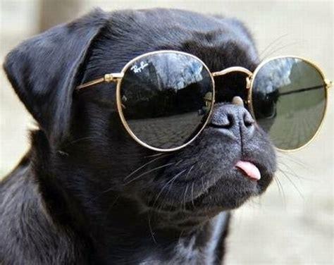 cool dog names  top  cool dog names