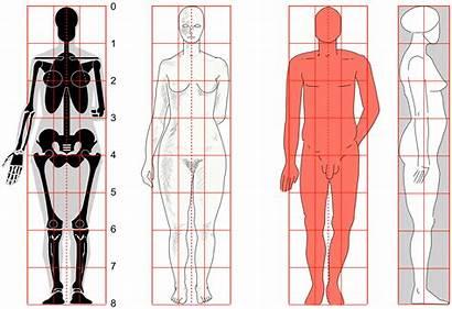 Human Svg Zeichnen Menschen Commons Proportion Proportionen