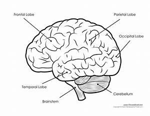 Drawn Brain Labeled