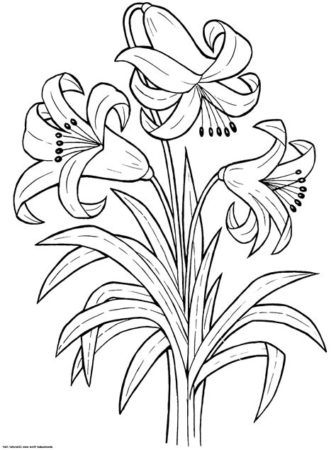 Printable Flower Coloring Pages | Rose coloring pages