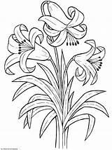 Coloring Flower Pages Flowers Printable Lily Worksheets Spring Colouring Sheets Rose K5worksheets Depuis Enregistree sketch template