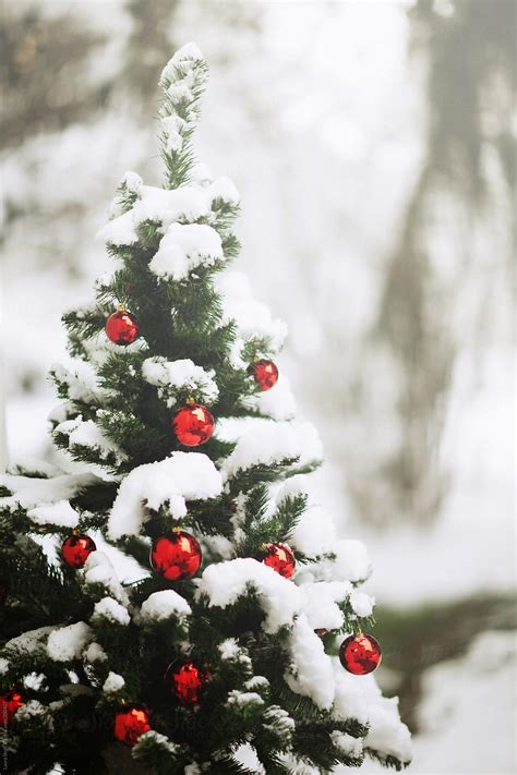 covered  snow christmas tree decorated  red balls