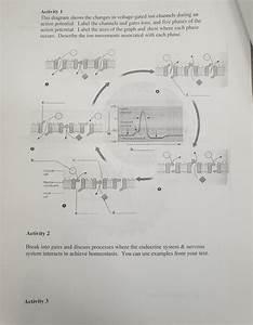 32 Endocrine System Diagram To Label