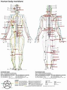 Human Body Meridian Chart  U0026 The Nervous System