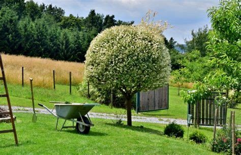 Exotische Pflanzen Im Garten by Exotische Pflanzen Im Eigenen Garten Freshouse
