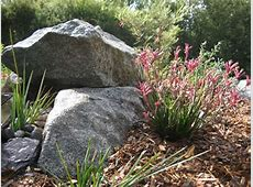 Natural Plantscape Wholesale supply of Landscaping Plants