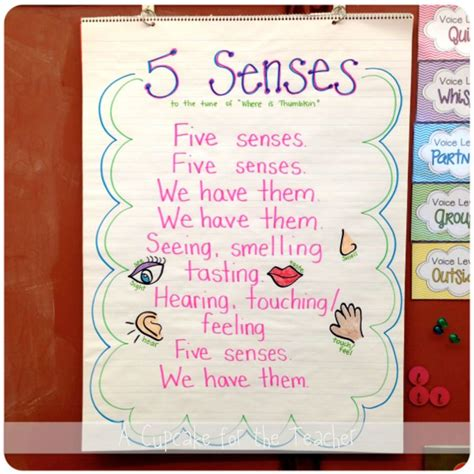 five sense worksheet new 390 five sense preschool songs 5 | 78bce2f867c4ce6699ceceb365533c3d