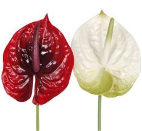 türkranz selber machen frühling seidenblumen g 195 188 nstig kaufen