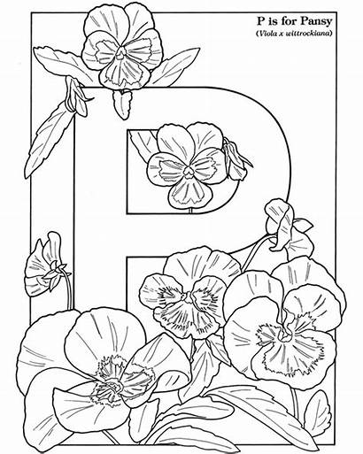 Pansy Coloring Flowers Dover Publications Doverpublications Inkspired