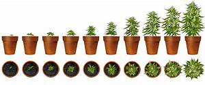 How To Grow Weed  The Organic Way Like The Pros