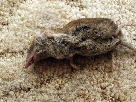 Fangen Im Haus by Maus Im Haus Fangen Maus Im Haus Bad Wildungen M Use Im