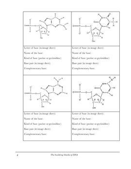 Dna Structure Worksheet Identifying Nucleotides By Digital World Biology