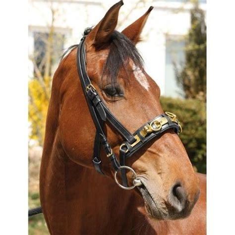 welchen dfreiniger kaufen welchen kappzaum kaufen pferde longieren