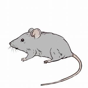 Comment Attraper Une Souris : comment dessiner une souris 7 tapes avec des photos ~ Dailycaller-alerts.com Idées de Décoration