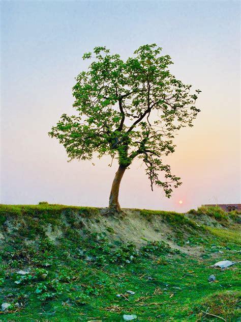 tree images pexels  stock
