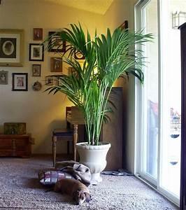 Pflanzen Für Wohnzimmer : wohnzimmer palme pflanzen f r nassen boden ~ Markanthonyermac.com Haus und Dekorationen