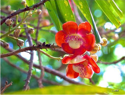le jardin de pamplemousses  lile maurice