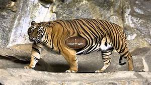 Image Gallery most endangered animal ever
