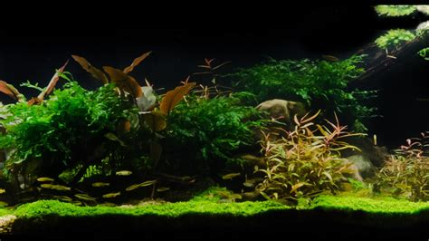 Amano Aquascape by Takashi Amano Tribute Aquascape By Findley Pebbles