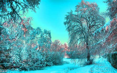 Beautiful Winter Trees Background View Hd Wallpaper