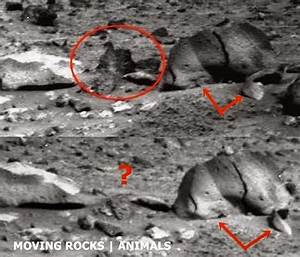 Mars Rover Animals 2014 (page 2) - Pics about space