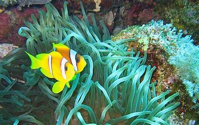 Fishes Wallpapers Fish Underwater Sea Ocean Clown