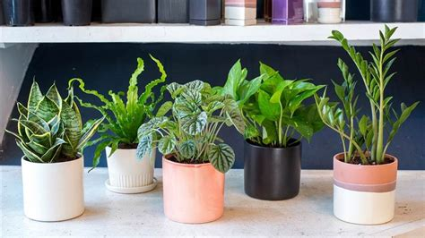best small indoor plants low light 11 plants for your bedroom to help you sleep better