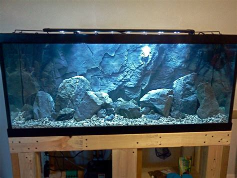 mbuna aquascape aquascape idea lake malawi mbuna cichlid aquarium