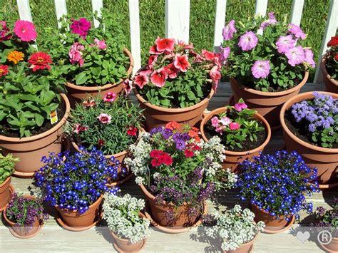 Authentic Pharmaceuticals Ltd  Garden Flower Pot And