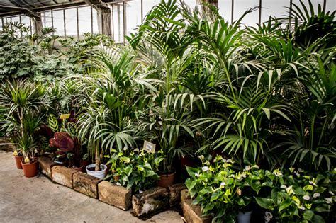 Piante Tropicali Da Interno - composizione piante da interno zo25 187 regardsdefemmes