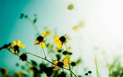 Flowers Wallpapers Desktop Mi Amazing