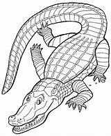 Crocodile Coloring Pages Print Animal Animals Leopard sketch template