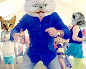 Cat Party GIFs - Find & Share on GIPHY